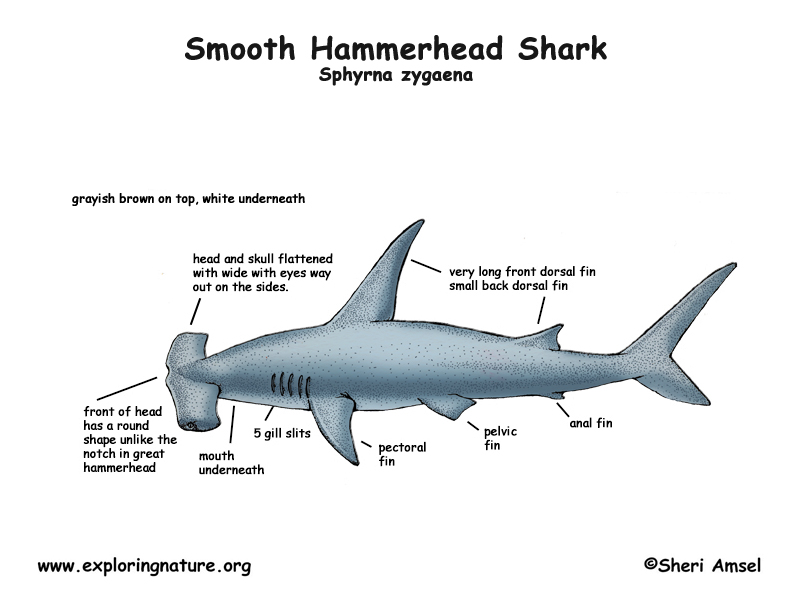 Diagram About Sharks Block And Schematic Diagrams